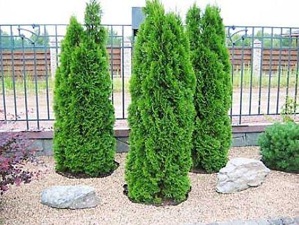 Растения деревья и кустарники